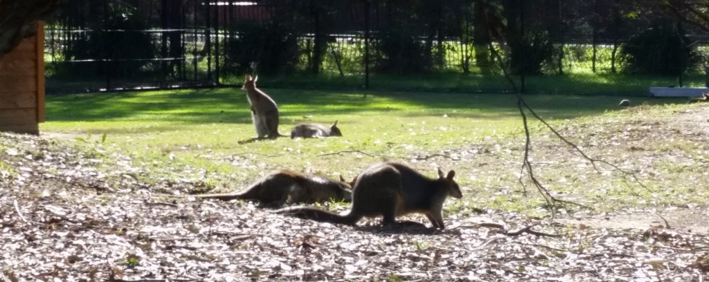 Central Gardens Merrylands Wallabies