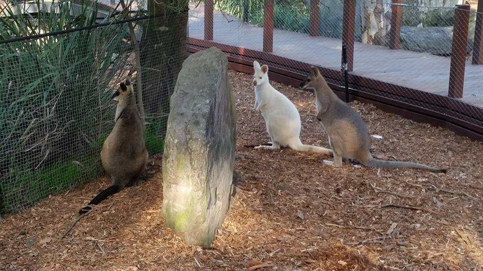 Auburn Botanic Gardens Animals