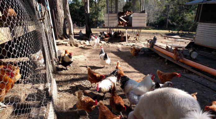 Nancy's Freedom Farm Arcadia