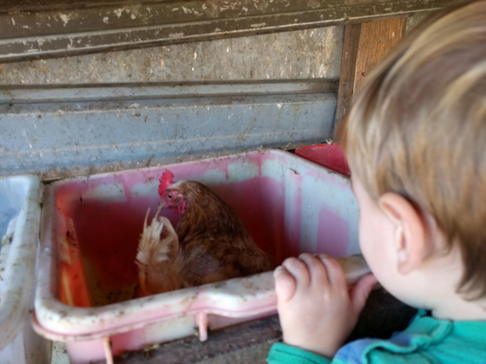 Nancy's Freedom Farm