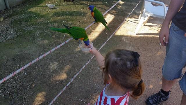 Walk in bird aviary, Canberra