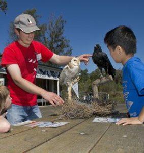 Birds of the Armory Walk @ Newington Armory | Sydney Olympic Park | New South Wales | Australia