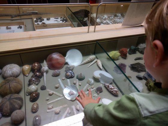Australian Museum