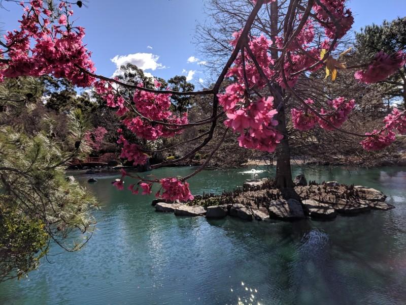 Kids Day Sydney Cherry Blossom Festival Auburn Botanic Gardens Parraparents,Wall Stickers For Bedroom Amazon