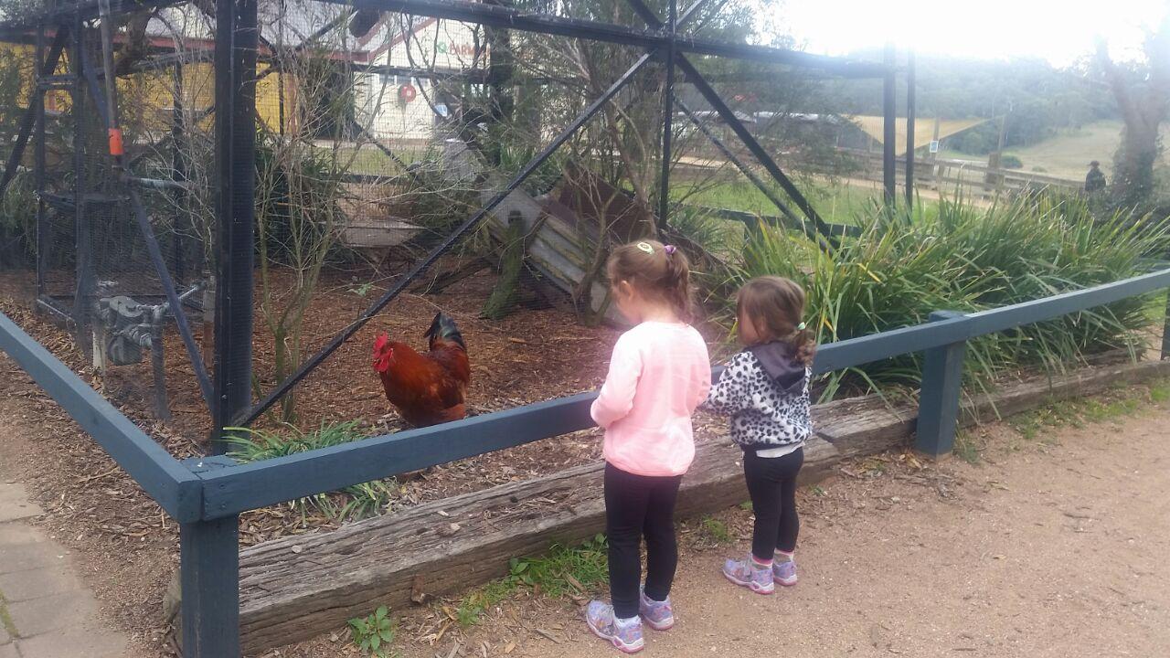 Calmsley Hill City Farm