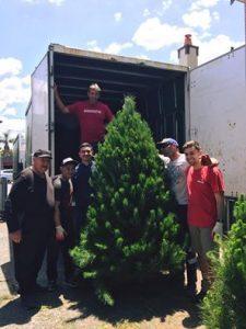 Merlino's Christmas Trees | Inner West @ Merlino's Christmas Trees | Wareemba | New South Wales | Australia