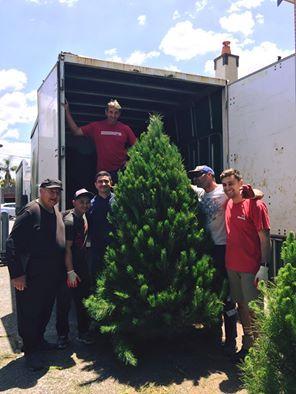 Merlino's Christmas Trees