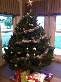 Rotary Club of Parramatta City Christmas Trees