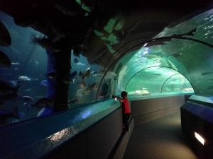 Manly Aquarium