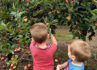 Bilpin Fruit Bowl