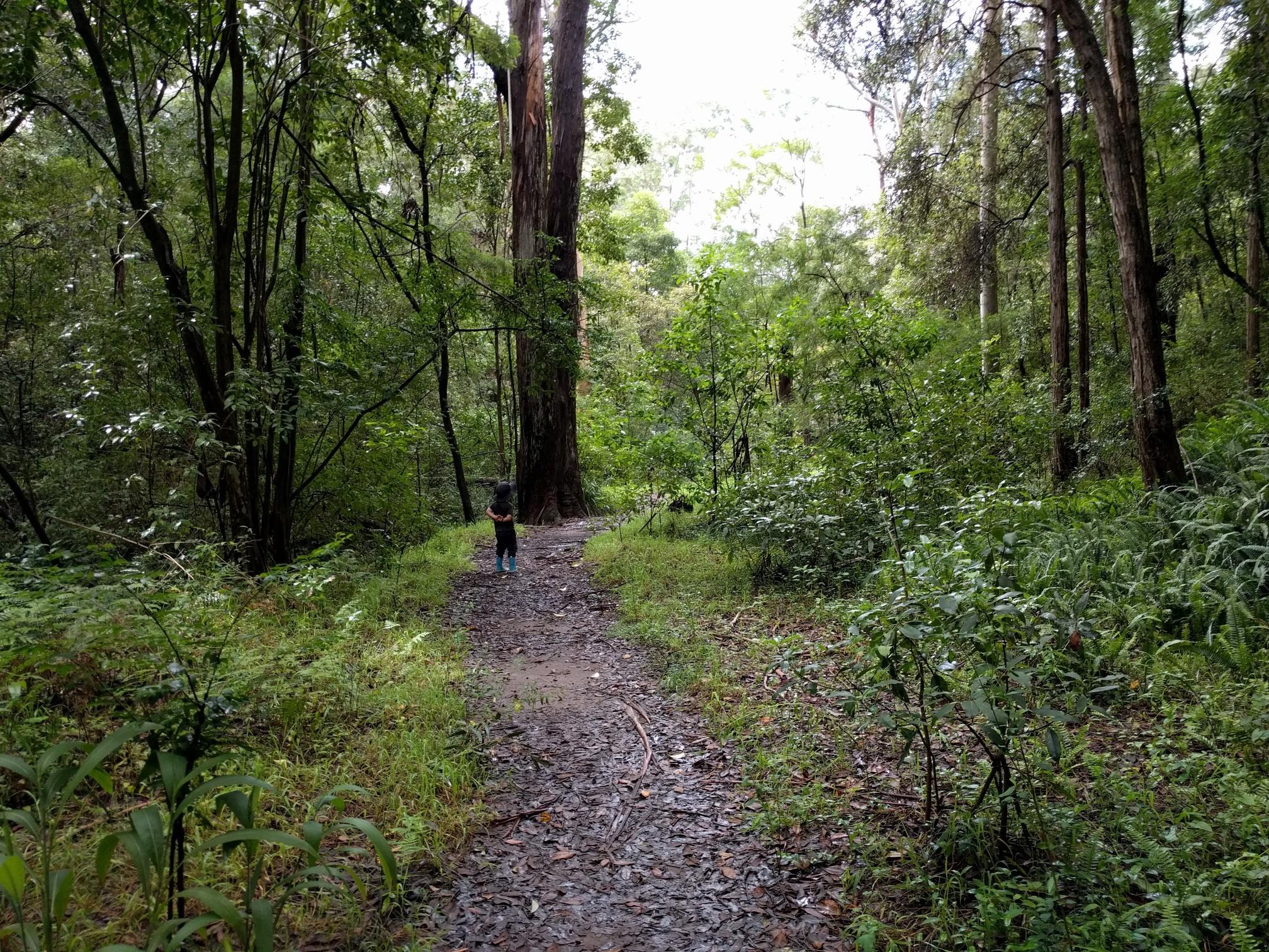 Hunts Creek Reserve