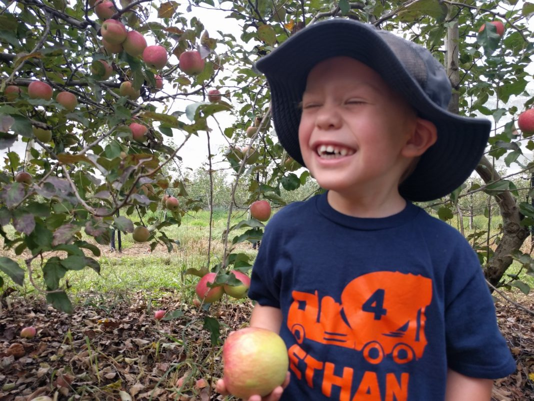 Pine Crest Orchard Apples
