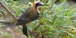 Bats, Birds and Beasties   Parramatta @ Parramatta Heritage and Visitor Information Centre   Parramatta   New South Wales   Australia