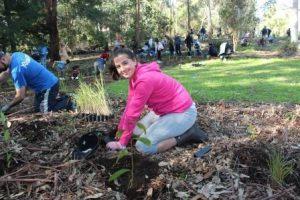 National Tree Day | City of Parramatta @ Third Settlement Reserve | Winston Hills | New South Wales | Australia