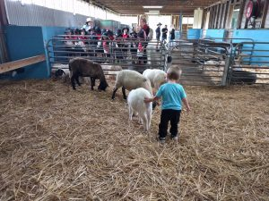 Calmsley Hill City Farm