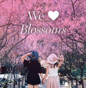 Sydney Cherry Blossom Festival | Auburn Botanic Gardens @ Auburn Botanic Gardens | Auburn | New South Wales | Australia