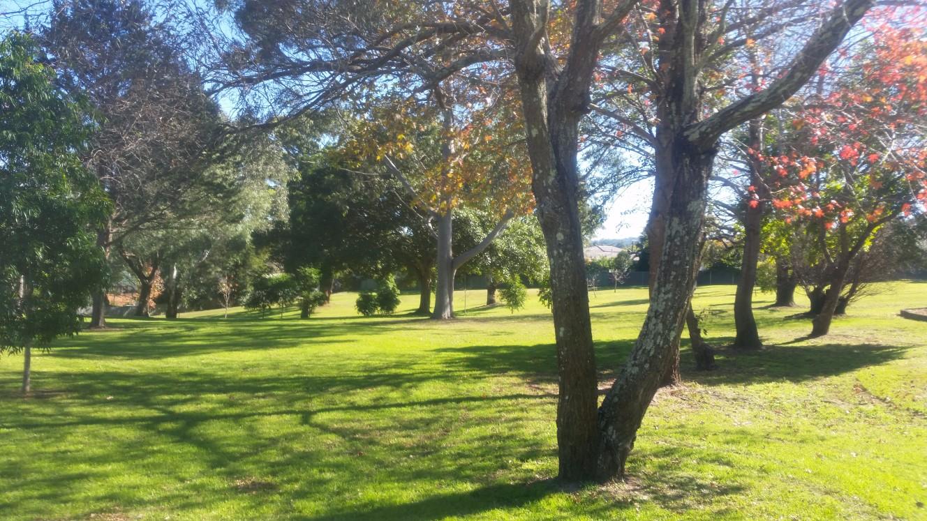 Pine Tree Park
