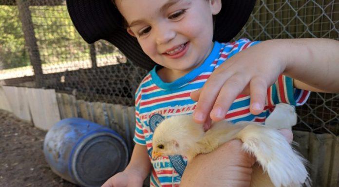 Kookaburra Farmstay