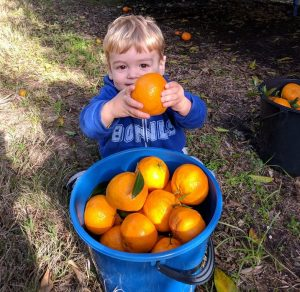 Farm Gate Opens Mandarin Season | Watkins Farm @ Watkins Family Farm | Laughtondale | New South Wales | Australia