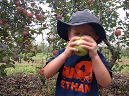 Pine Crest Orchard Bilpin
