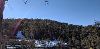 Corin Forest