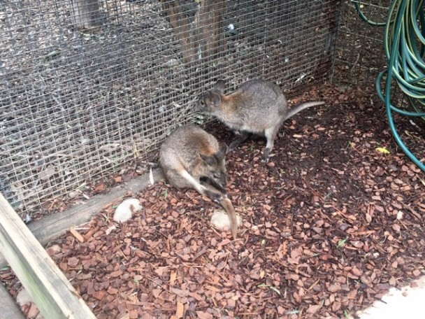 Featherdale Wildlife Park | Doonside