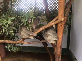 Featherdale Wildlife Park | Doonside