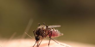 Staying Safe from Mozzies Mosquitos Dr Cameron Webb