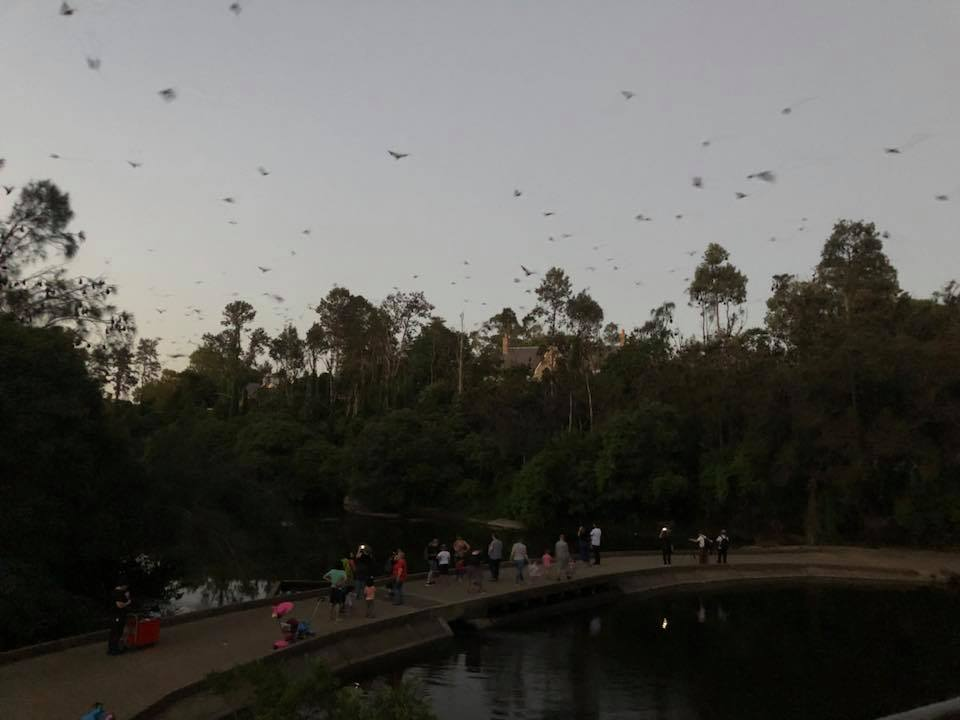 Bat Night Parramatta Park