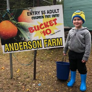 Pick Your Own Oranges and Mandarins | Anderson Farm, Hawkesbury River @ Anderson Farm | Sackville North | New South Wales | Australia