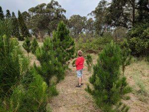 Tomalong Christmas Tree Farm | Kenthurst @ Tomalong Christmas Tree Farm | Kenthurst | New South Wales | Australia
