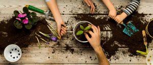Seedling and Potting Workshop | Westfield Hornsby @ Westfield Hornsby | Hornsby | New South Wales | Australia