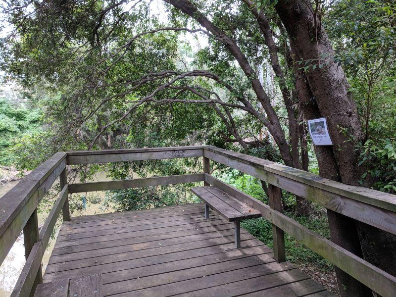 Walking trail echidna