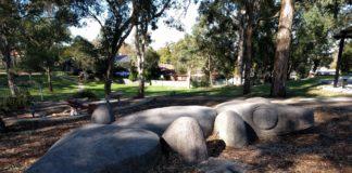 Caber Park: resident lizard