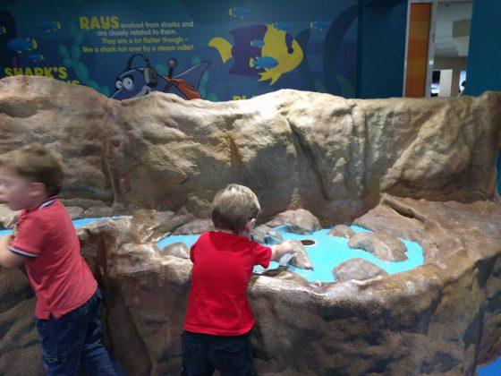 Manly Aquarium