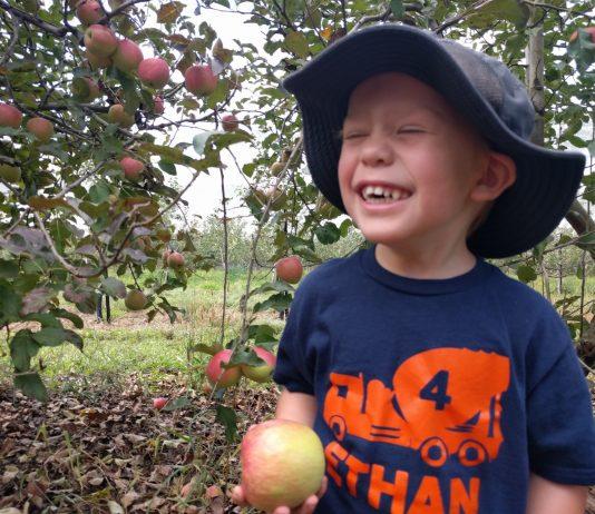 Pine Crest Orchard Apples
