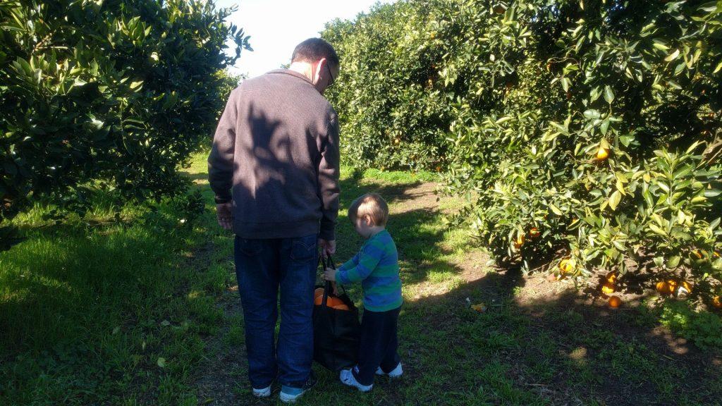 Schofields orange orchard