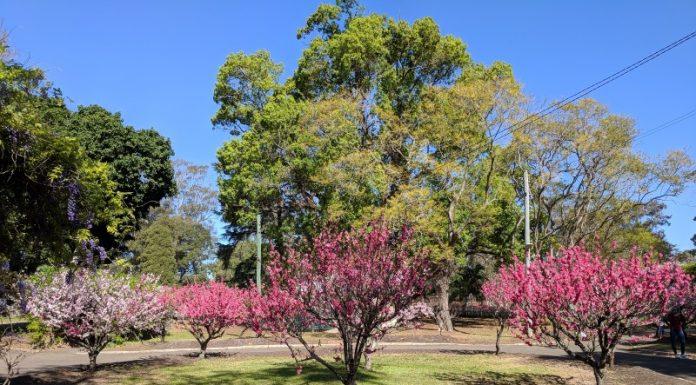 Wistaria Gardens Westmead Parramatta Park