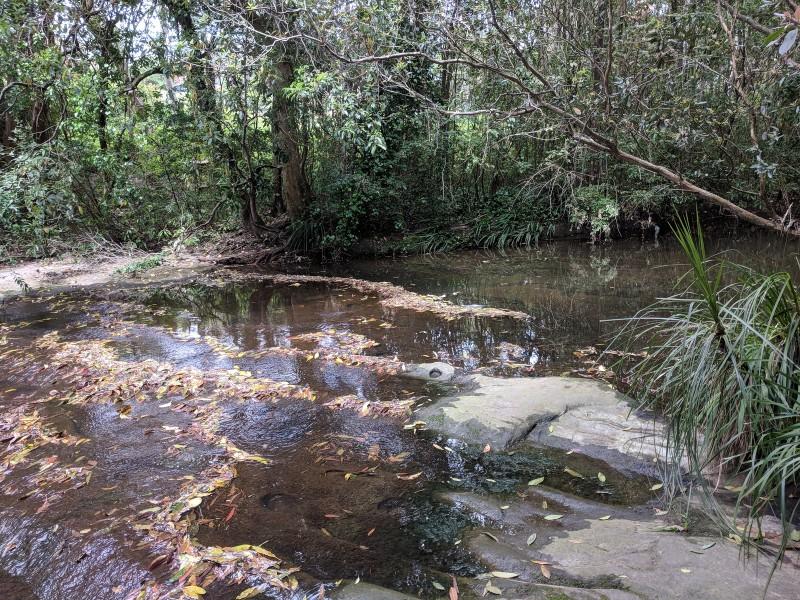 Terrys Creek bushwalk Epping Eastwood
