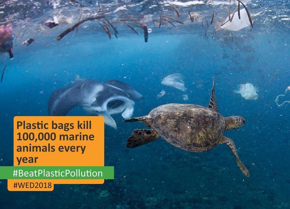 Single Use Plastic CCA Boomerang Bag Giveaway