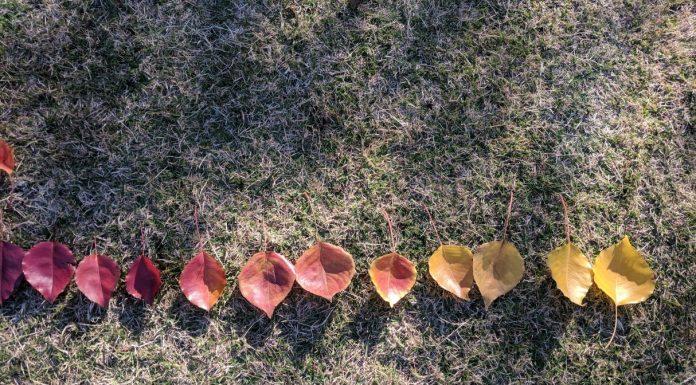 Autumn colours parramatta park
