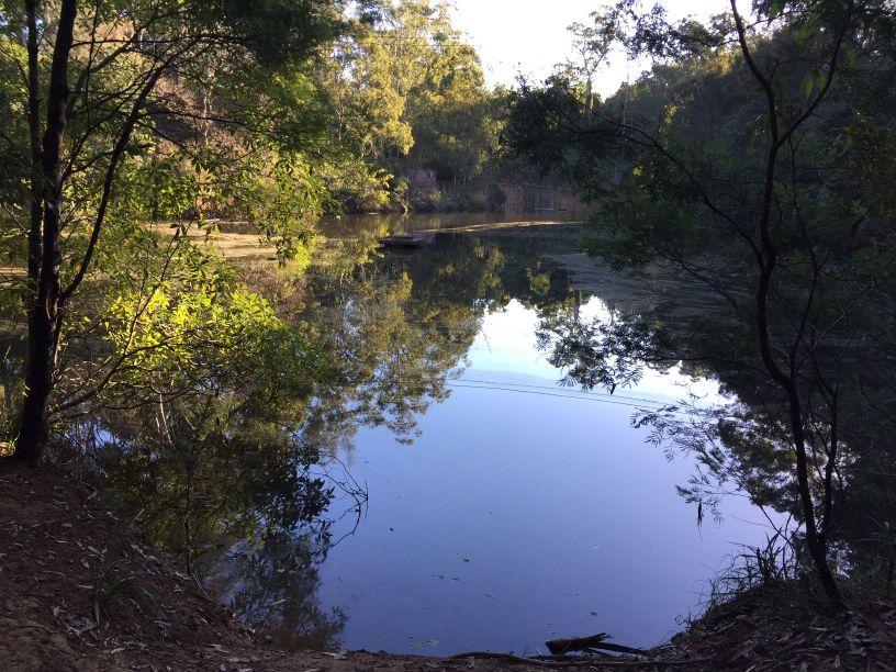 Vineyard Creek Reserve Telopea