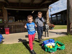 Fruit Picking (Tomato, Citrus) at Canoelands Orchard @ Canoelands Orchard | Canoelands | New South Wales | Australia