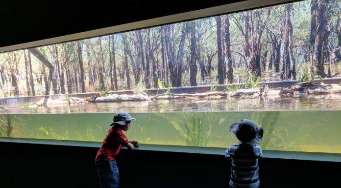 New Sydney Zoo Bungarribee Western Sydney Parklands Doonside