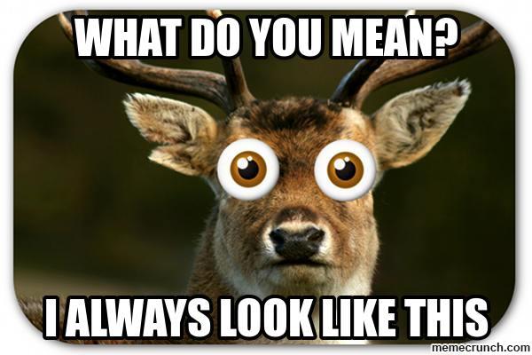 Kindy Daze deer in headlights