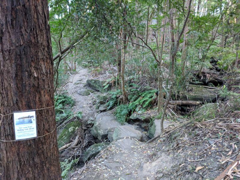 our living river walking trail hunts creek reserve