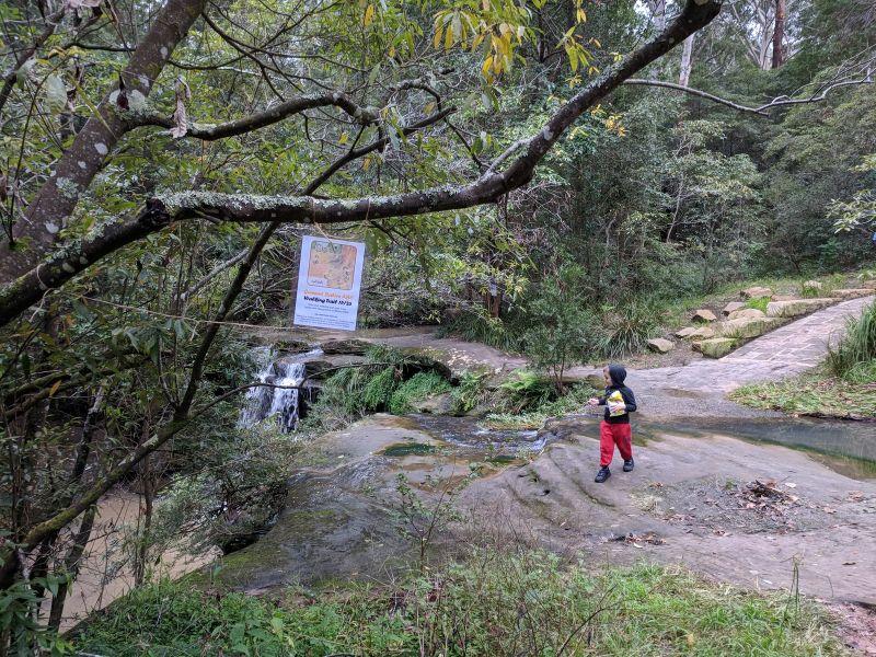 gumnut babies abc walking trail hunts creek carlingford