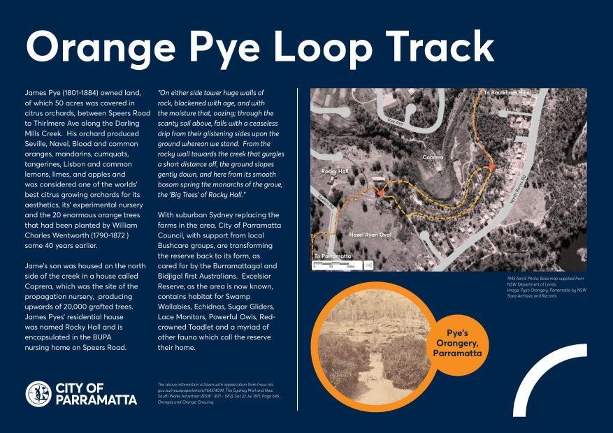 Orange Pye Loop Track Hazel Ryan OVal