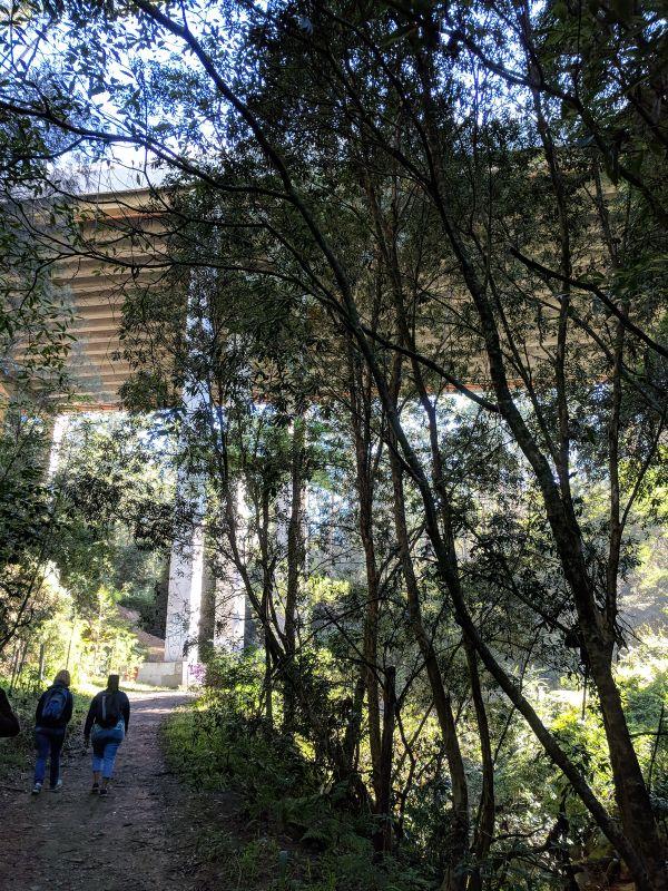 Bidjigal Reserve Northmead
