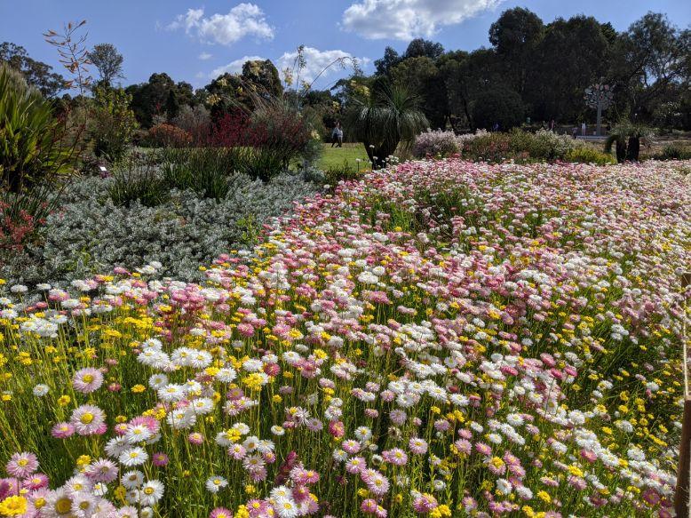 Australian Botanic Gardens Mt Annan